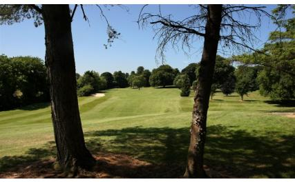 Ardee Golf Club - trees and course