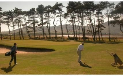 Greenore Golf Club - green