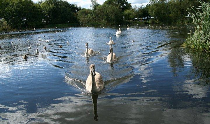Stephenstown Pond Nature Park | Visit Louth